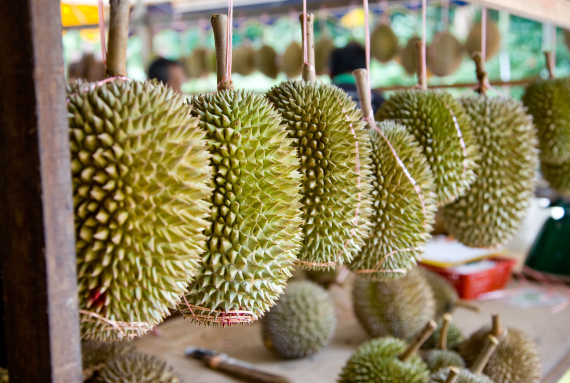 Frozen durian flesh with seed
