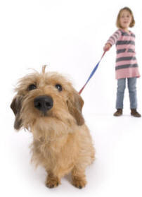 On Leash Obedience Dog Training