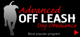 Dog Training Lunenburg Massachusetts
