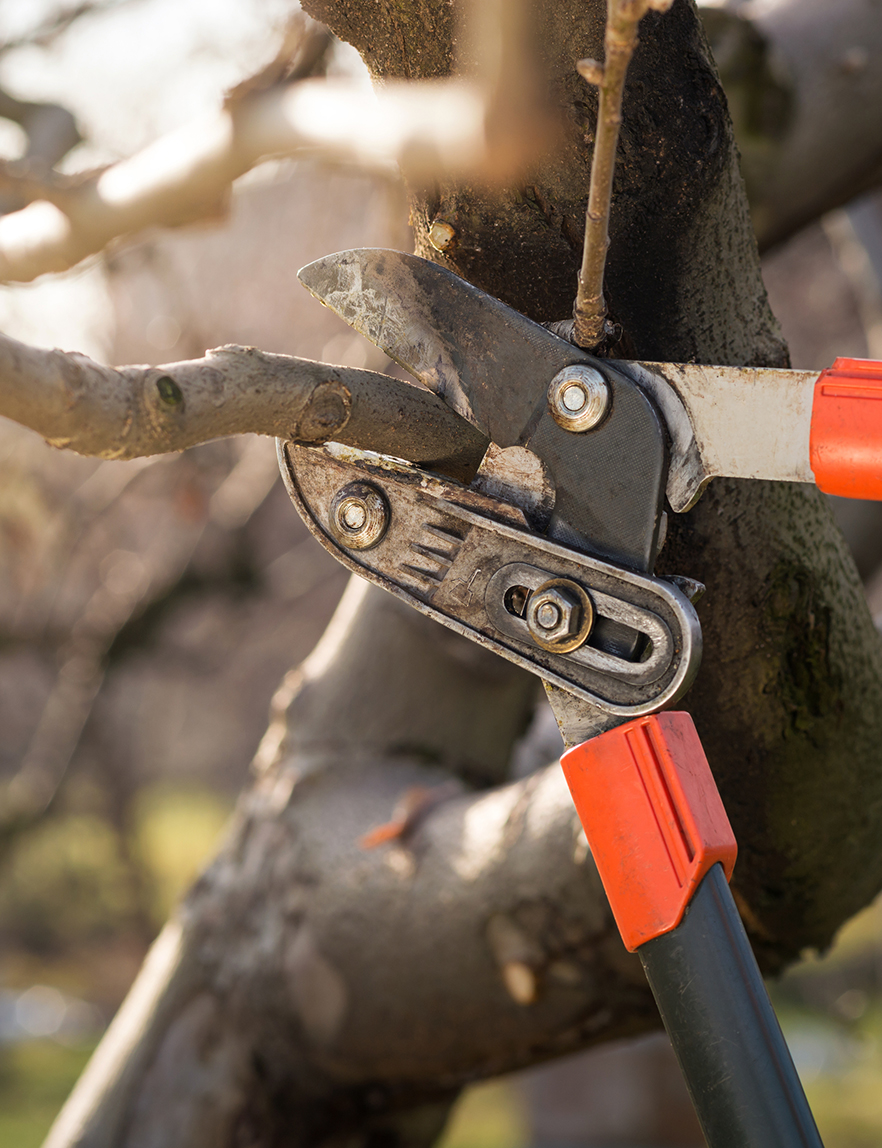 Tree Pruning Central Massachusetts