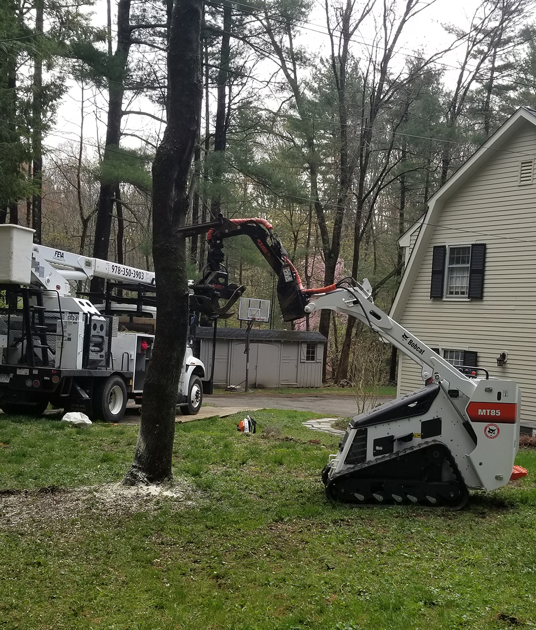 Tree Removal Sterling Massachusetts