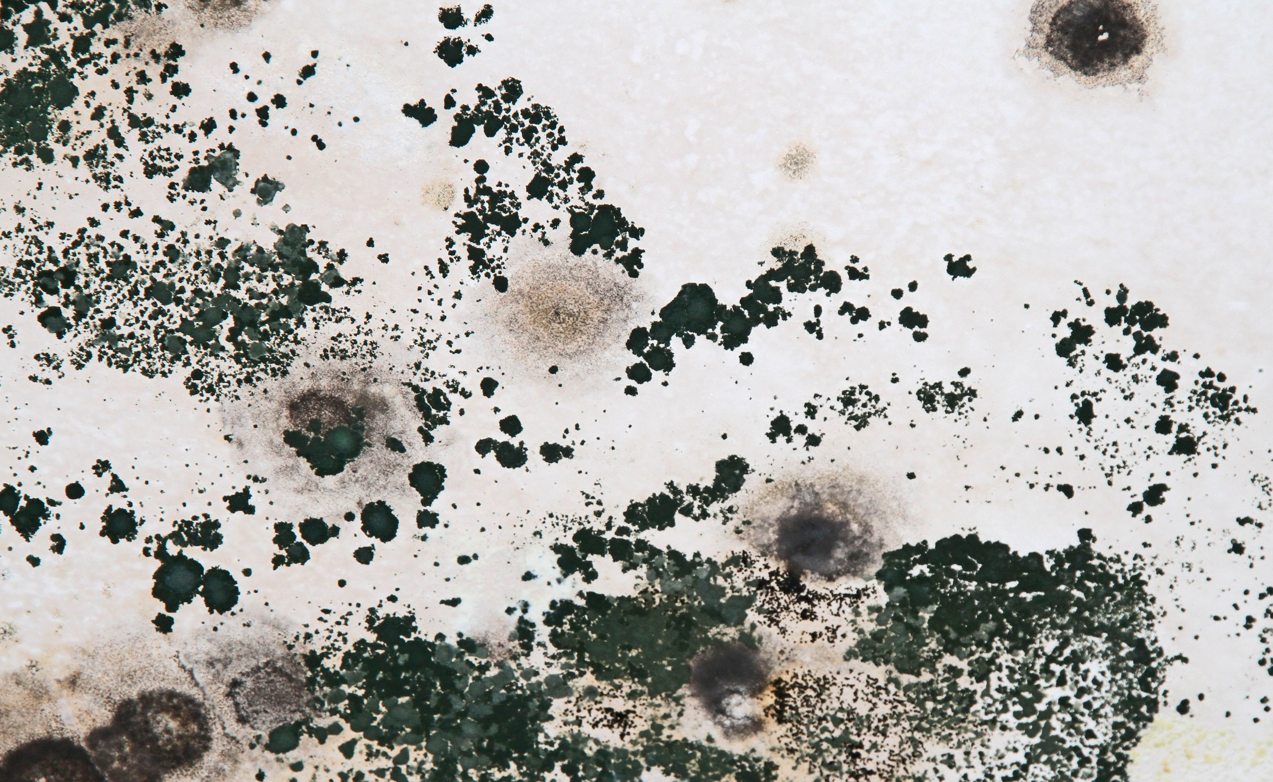 Mold in Attic Removal Massachusetts