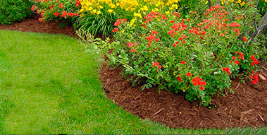 Example of a properly mulched planting bed