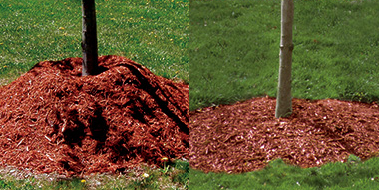 Side by side comparative of proper mulch application around trees