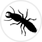 Termite Control New Hampshire