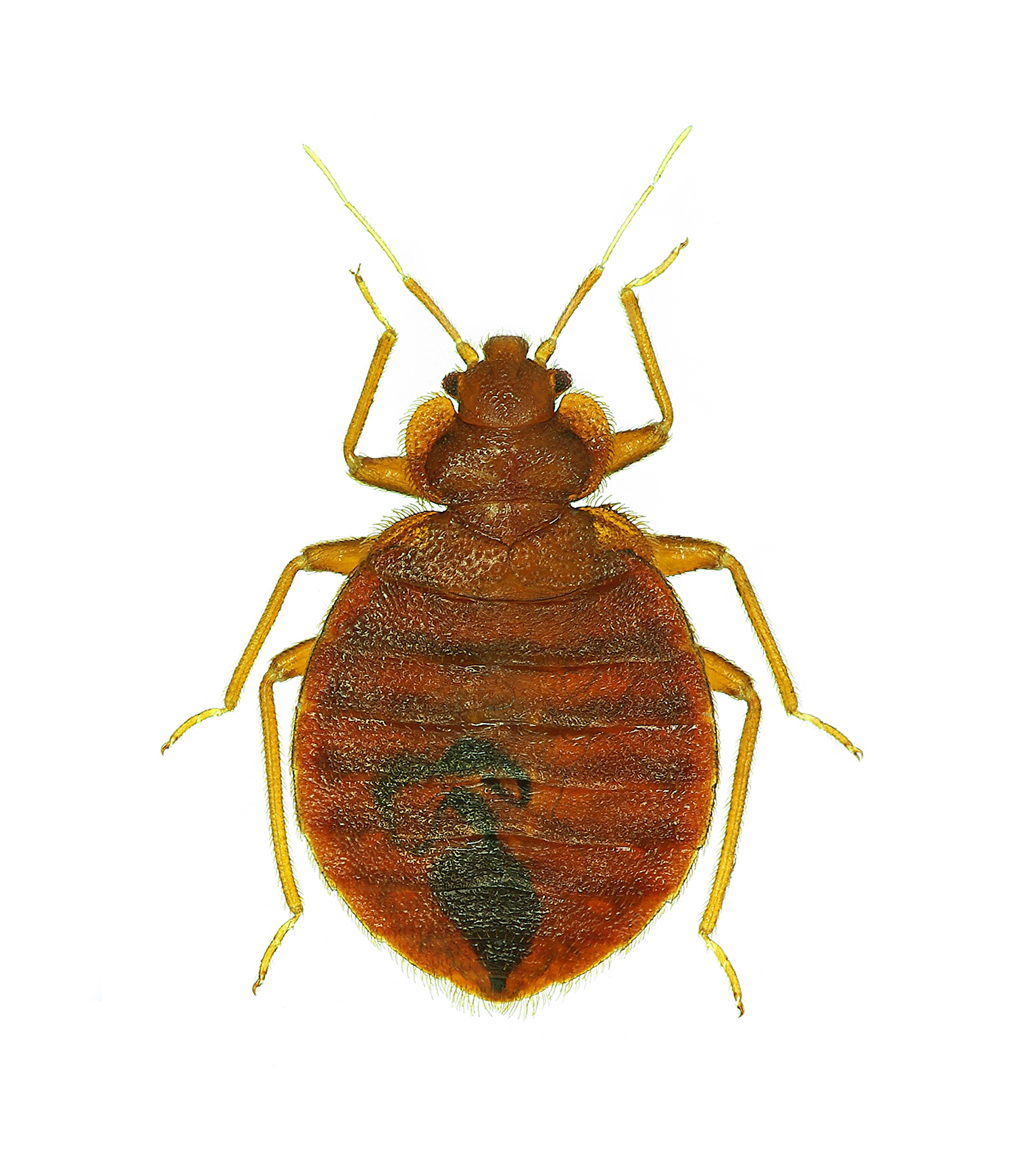 Bed Bug Control New England