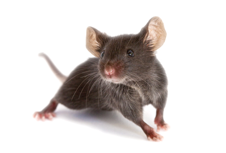 Mice Pest Control Services Maine