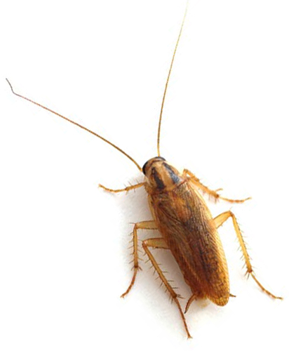 Cockroach Pest Control Solutions New England
