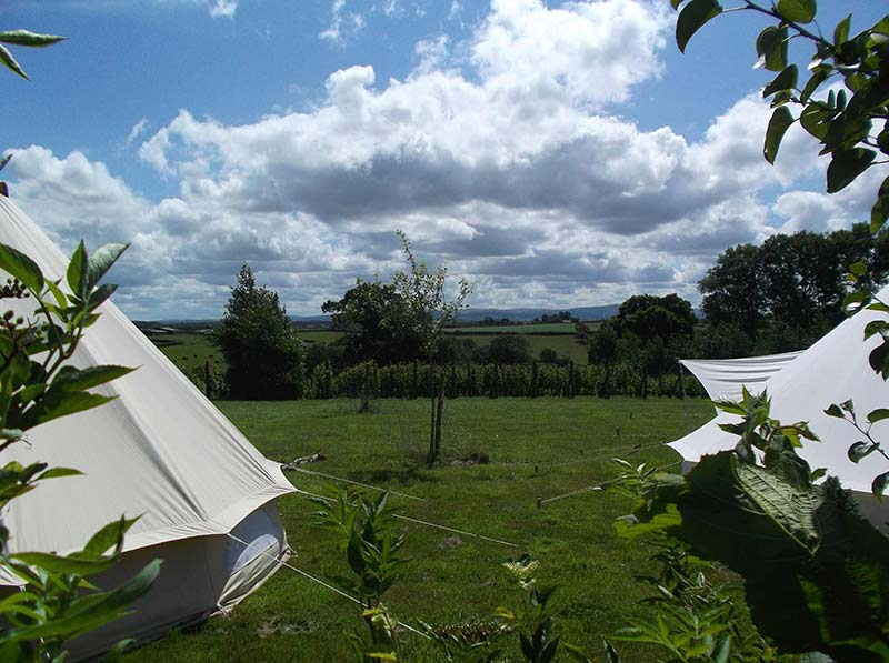 Ten Acres Vineyard | Glamping & Camping Devon